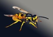 bug-3104996__340